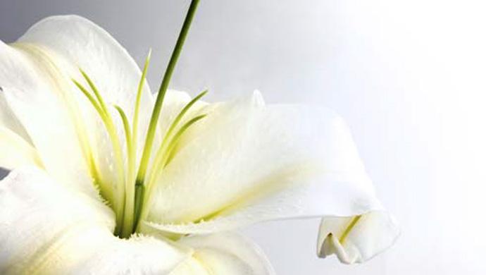 Memorial donations… in lieu of flowers…